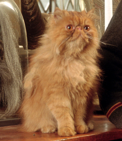 File:Crookshanks PM.png