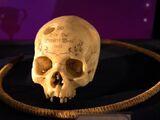 Crânio-narguilé de Gerardo Grindelwald