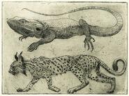 Kuguchar i Wsiąkiewka - ilustracje Olivii Lomenech Gill