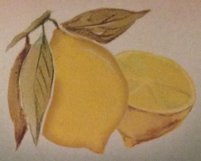 Lemon | Harry Potter Wiki | FANDOM powered by Wikia