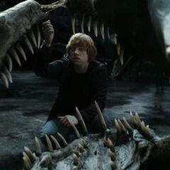 Рон берёт клык василиска для уничтожения крестража