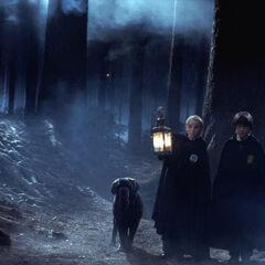 Драко и Гарри в Запретном лесу