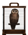 Brown-owl-lrg.png