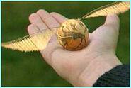 Gouden Snaai