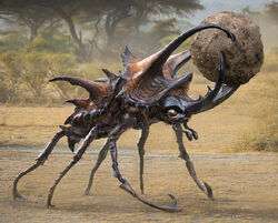 Giant Dung Beetle
