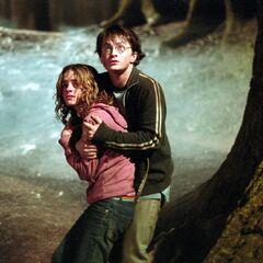 Гарри и Гермиона в Запретном лесу