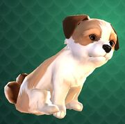 Crup Puppy