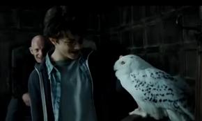 Harry en Hedwig