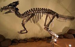 Дракорекс хогвартский
