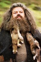 Hagrid z fretkami