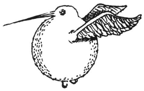 Categorybirds harry potter wiki fandom powered by wikia