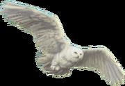 HedwigWU