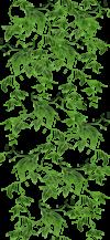 Nav-Botanique lierre 2