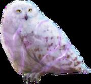 Brilliant Hedwig WU