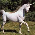 HP quiz TS unicorn.jpg