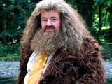 Rubeus Hagrid's dress robes