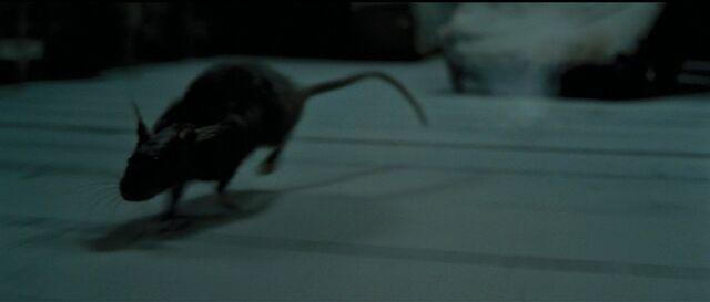 Datei:Scabbers The Rat.jpg