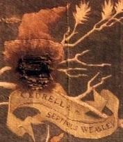 Cedrella Weasley