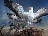 Oiseau-tonnerre