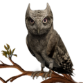 Eagle Owl PM.png