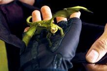 Жребий Флёр Делакур - Валлийский зелёный дракон (ГПиКО)