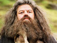 Il-guardiacaccia-di-hogwarts-rubeus-hagrid