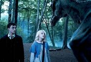 Harry, Luna, Thestral