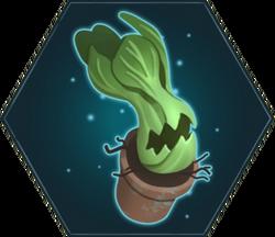 Китайская жующая капуста (HM)