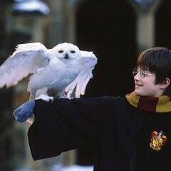 Гарри и Букля