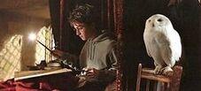 HarryPotterInBedWithWandMaraudersMapAndHedwig Still