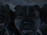 Trzygłowy pies