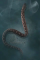 Common adder.PNG