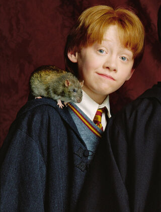 Ron and Scabbers
