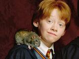Weasley family pets