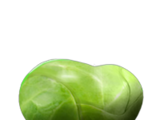 Sprout (food)
