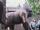 GorillaStatue.png
