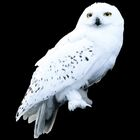 Hedwig WB F3 HedwigStill Promo 100615 Port