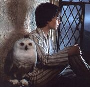 Harry und Hedwig Gryffindorturm