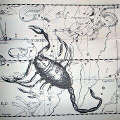 Созвездие Скорпиона (Скорпиус Малфой)