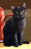 File:Silas Crump's cat.png