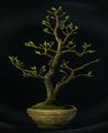 Wiggentree sapling.png