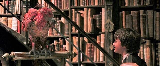 File:Harry-potter2-movie fawkes harry.jpg