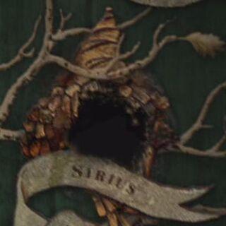 Сириус на семейном древе Блэков