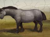 Cadogan's pony