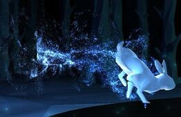 WildRabbit-patronus