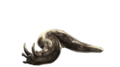 HornedSlug.png