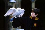 Harry + Hedwig