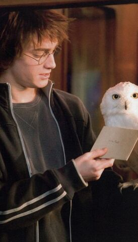 File:Harry and Hedwig GOF.jpg