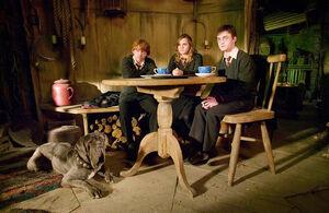 O Trio Na Cabana De Hagrid