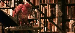 Harry-potter2-movie-fawkes